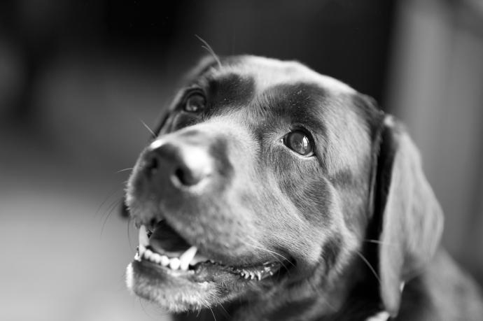 hundefoto-001