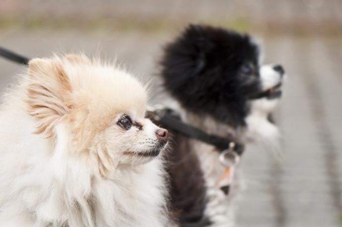 hundefoto-003