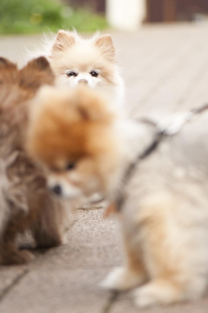 hundefoto-005
