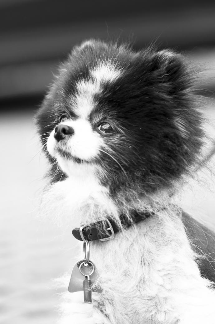 hundefoto-007